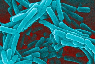 инфекции - причины повышения лейкоцитов
