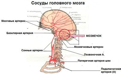 Вестибуло-атактический синдром