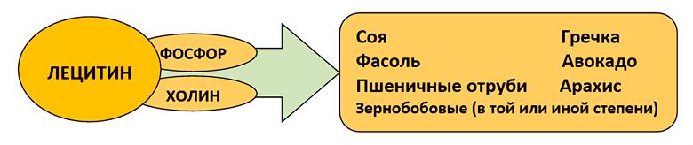 holesterin-snizhajushhie-produkty-table-3