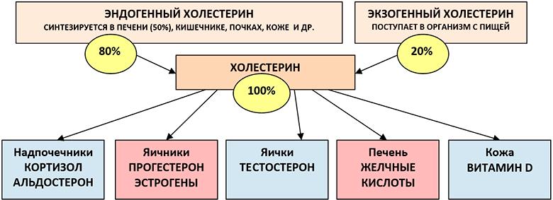 holesterin-snizhajushhie-produkty-table
