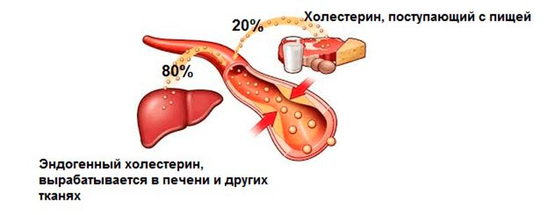kak-ponizit-kholesterin-v-domashnikh-usloviyakh-img-1