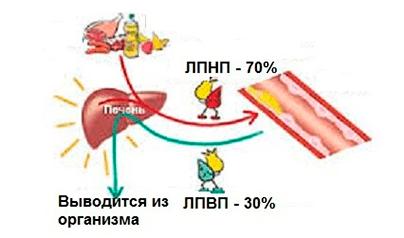 понизить холестерин в крови лечение