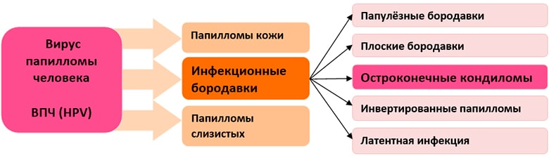 Кондиломы остроконечные  таблица