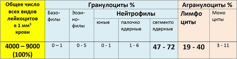 таблица норм лейкоцитов для взрослых и детей