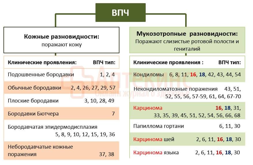 Классификация ВПЧ - таблица
