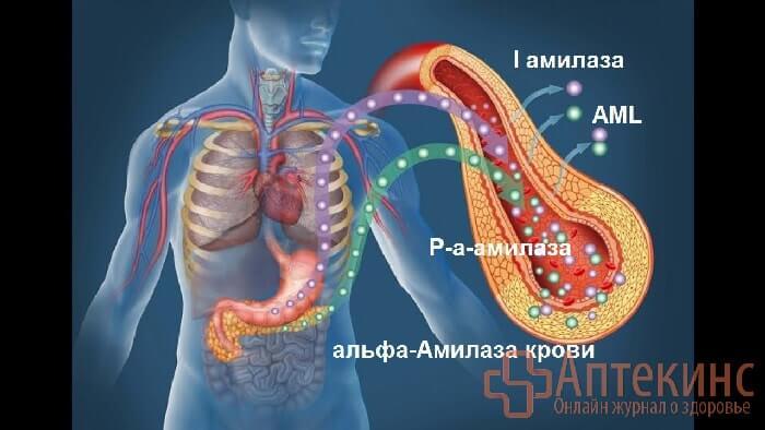 Альфа-амилаза в крови - норма