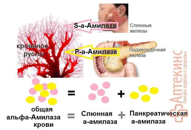 Изомеры альфа-амилазы