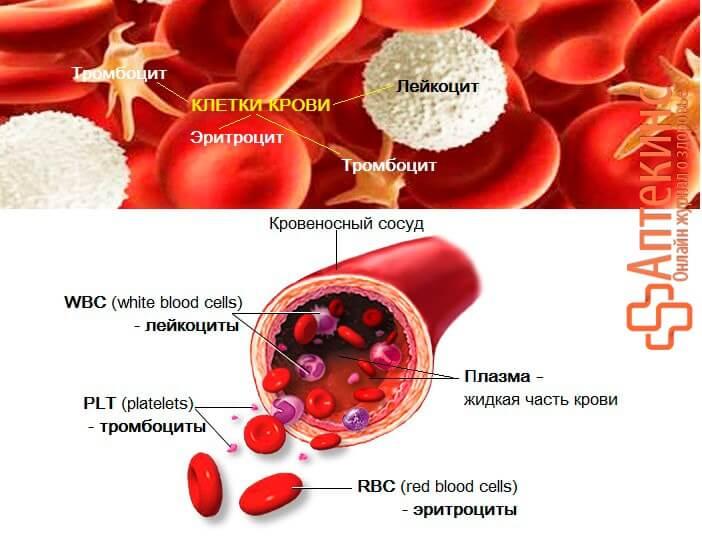 PLT в крови