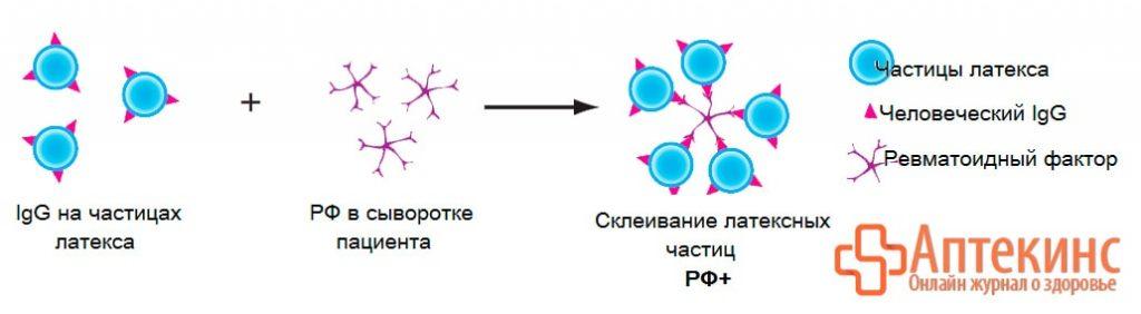 Латекс-тест на ревматоидный фактор